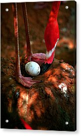 Acrylic Print featuring the photograph Bird Is The Word by Lon Casler Bixby