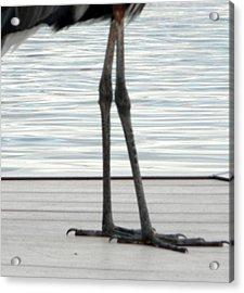 Bird Legs Acrylic Print by Christy Usilton