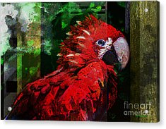 Bird Of Exotic Color Acrylic Print