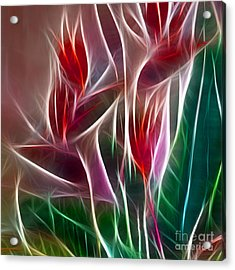 Bird Of Paradise Fractal Panel 2 Acrylic Print by Peter Piatt