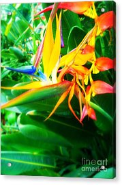 Bird Of Paradise Acrylic Print by Sacred  Muse