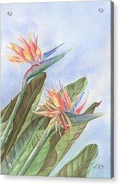 Bird Of Paradise Acrylic Print by Leona Jones