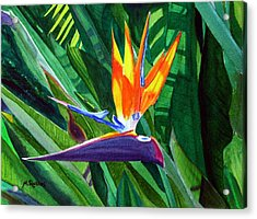 Bird-of-paradise Acrylic Print