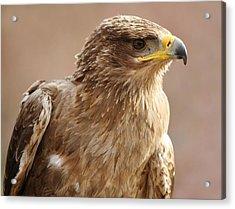 Bird Of Prey Acrylic Print by Paulette Thomas