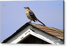 Bird On A Roof Acrylic Print