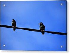 Bird On A Wire Acrylic Print by Aidan Moran