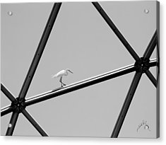 Acrylic Print featuring the photograph Bird On Structure by Williams-Cairns Photography LLC
