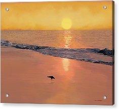 Bird On The Beach Acrylic Print by Tim Stringer