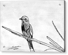 Bird Acrylic Print by Shashi Kumar