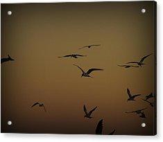 Bird Sky Acrylic Print by James Granberry