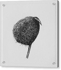 Bird Acrylic Print by Valdas Misevicius