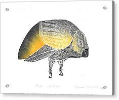 Bird Without A Voice Acrylic Print by Branko Jovanovic