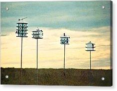 Birdhouse Row Acrylic Print