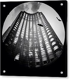 Birds Amongst The Skyscrapers Of New York City Acrylic Print