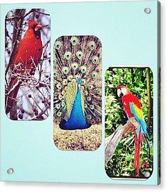 Birds Around Houston Acrylic Print