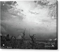 Acrylic Print featuring the photograph Birds At Mono Lake by John Burns