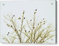 Birds Acrylic Print by E Murray