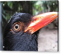 Birds Eye View Acrylic Print by Gary Heiden