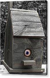 Birds Eye View Acrylic Print by Kristie  Bonnewell