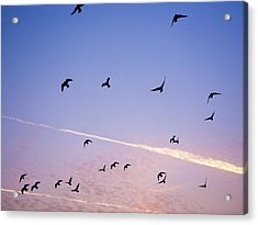 Birds Flying At Sunset Acrylic Print by Sarah Palmer