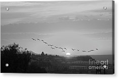 Acrylic Print featuring the digital art Birds Flying Into The Sunset by John  Kolenberg