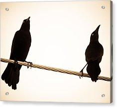 Birds In Black Acrylic Print