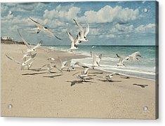 Birds In Flight Acrylic Print by Cheryl Davis