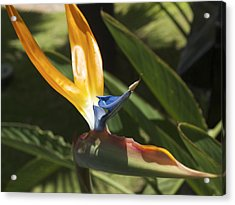 Birds In Paradise Acrylic Print by Larry Toth