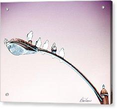 Birds On A Streetlight Acrylic Print