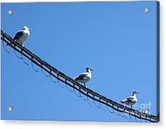 Acrylic Print featuring the photograph Birds On A Wire by Michelle Joseph-Long