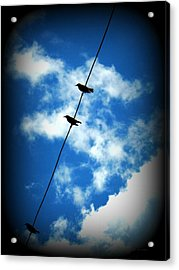 Acrylic Print featuring the photograph Birds On A Wire by Robin Dickinson
