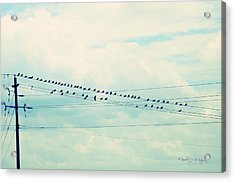 Birds On Wires Blue Tint Acrylic Print by Paulette B Wright