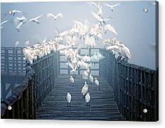 Birds Acrylic Print by Zu Sanchez Photography