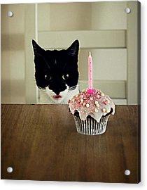 Birthday Cat Acrylic Print by Elusive Photography