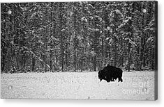 Bison In Snow Mosaic Acrylic Print by Barry Shaffer