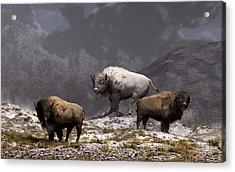 Bison King Acrylic Print
