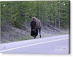 Bison On Road Acrylic Print
