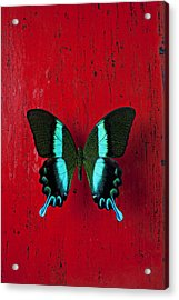Black And Blue Butterfly  Acrylic Print by Garry Gay