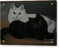 Black And White Cats Acrylic Print by Hilda Schreiber