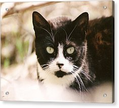 Black And White Feral Cat Acrylic Print