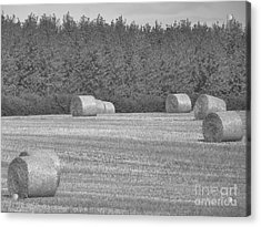Black And White Hay Bales Acrylic Print by Andrew May