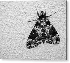 Black And White Moth Acrylic Print