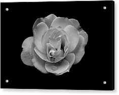 Black And White Rose Acrylic Print