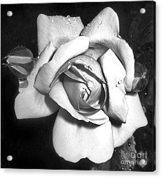 Black And White Rose Acrylic Print by Tina Ann Byers