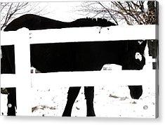 Black And White Acrylic Print by Todd Sherlock