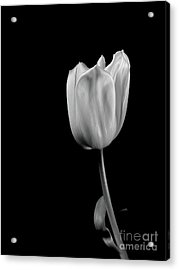 Black And White Tulip Acrylic Print