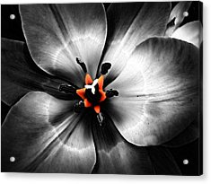 Black And White With A Glow Of Color Acrylic Print