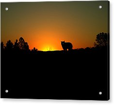 Black Bear Sunset Acrylic Print by TnBackroadsPhotos
