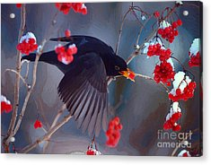 Black Bird In Flight Acrylic Print