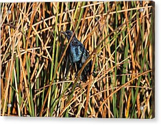 Acrylic Print featuring the photograph Black Bird by Jeanne Andrews